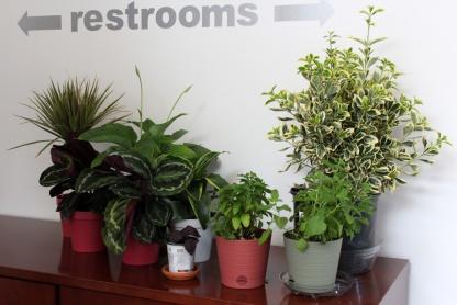 metro-plants